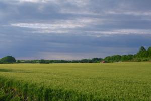 由仁の麦畑