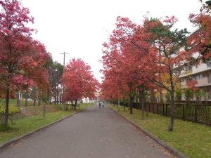 ナナカマド並木